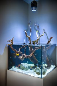 New Jersey Freshwater Cichlid Fish Tank