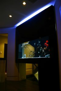 New Jersey Freshwater Fish Tank for Discus
