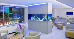 NY saltwater aquarium fish