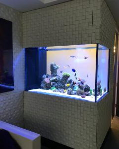 Saltwater Reef Aquarium Office Broadway NYC
