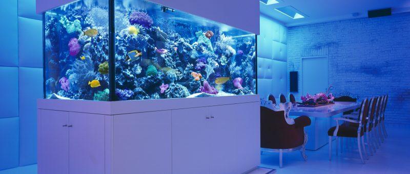 Okeanos Aquascaping Custom Aquariums 1