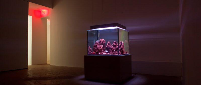 Unique Museum Aquariums