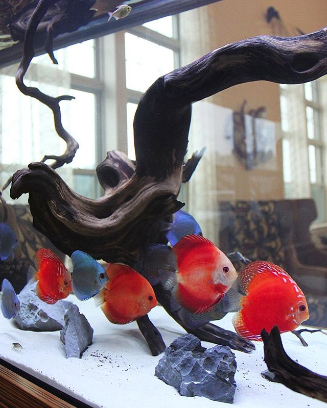 modern fish tank design whit a focus on the fish