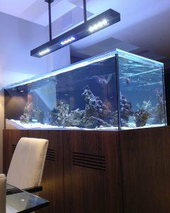 Central Park West Saltwater Aquarium installation