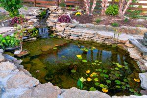 backyard outside aquarium