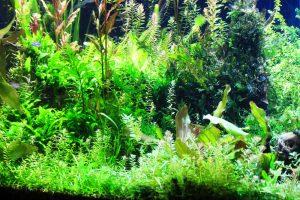 colorful aquarium plants
