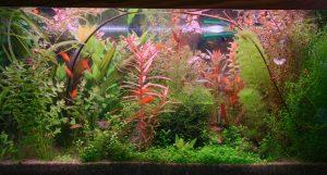 colorful plants in aquarium