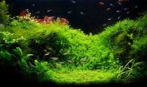 water wisteria carpet