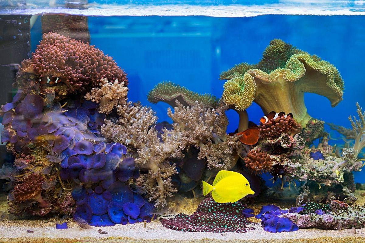 New York aquascape aquariums