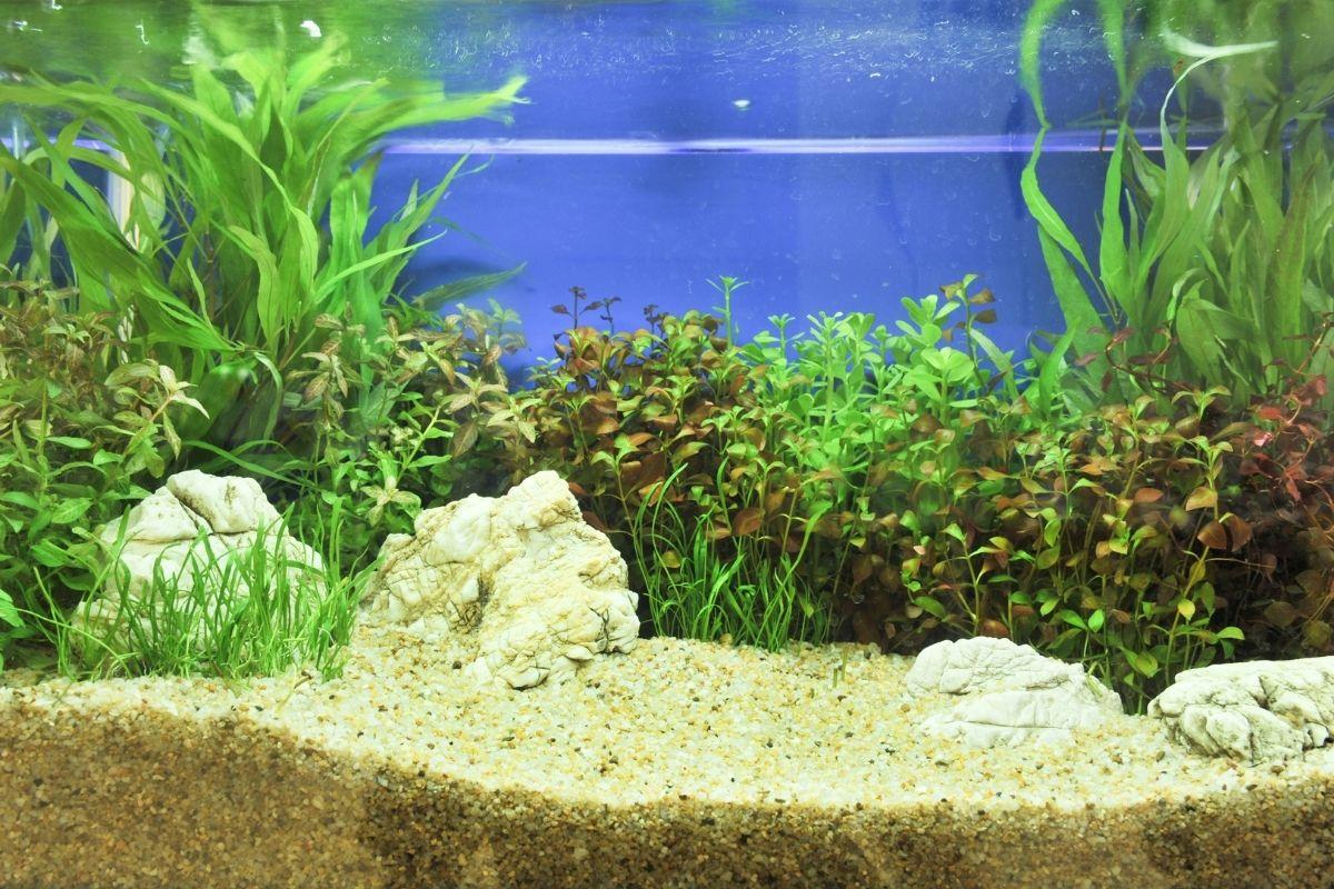aquarium plants New York Okeanos