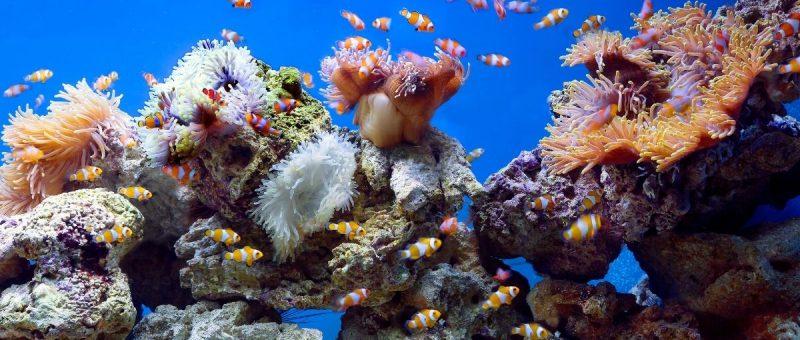 aquariums New York city