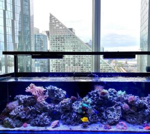 Aquarium Maintenance Services NY & NJ