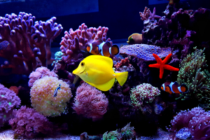 Fish tank cleaning New York City