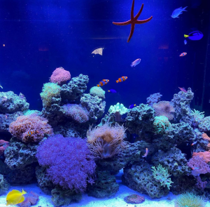 Fish Tank Cleaning New York & New Jersey