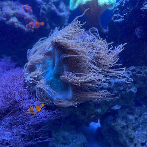 Aquarium Maintenance Service FAQs
