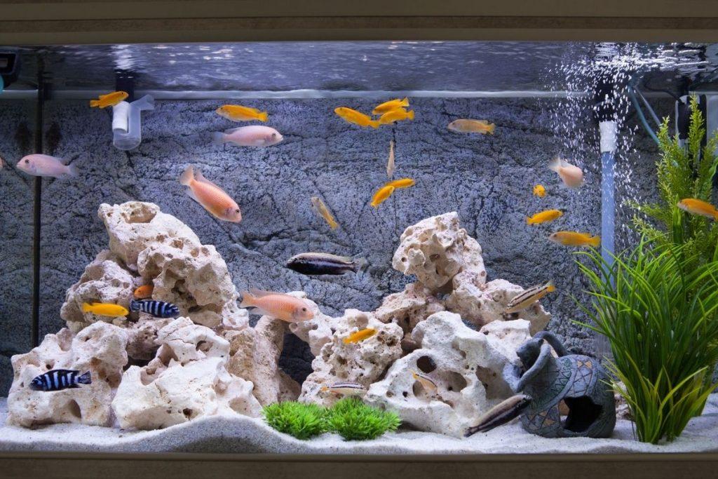 custom aquariums New York
