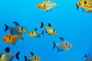 hospital aquariums NY