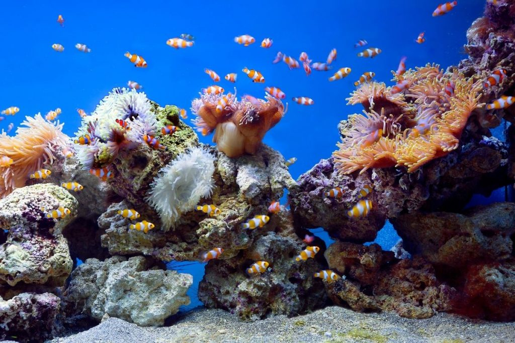 hospital aquariums New York