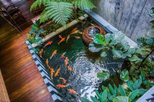 indoor pond New York