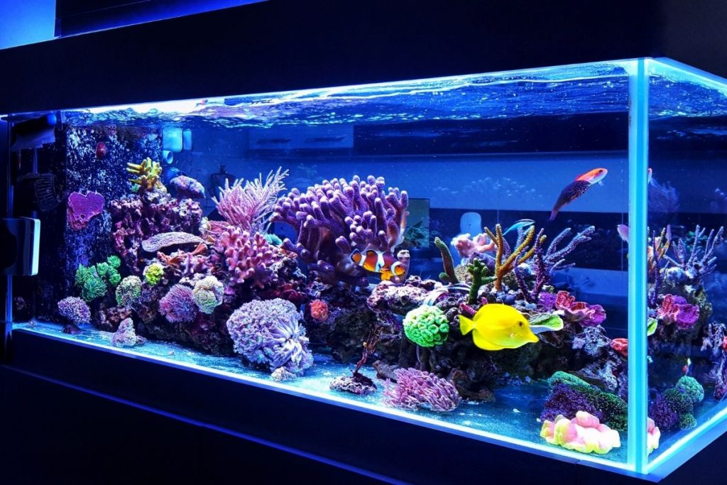 medical center aquariums New York