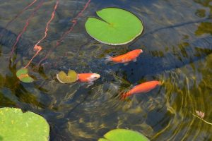outdoor and indoor ponds for businesses New York