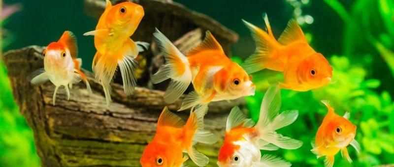 nursing home aquarium New York